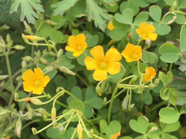 flower_8667c.jpg