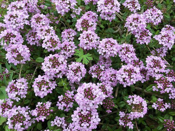 flower_8673b.jpg