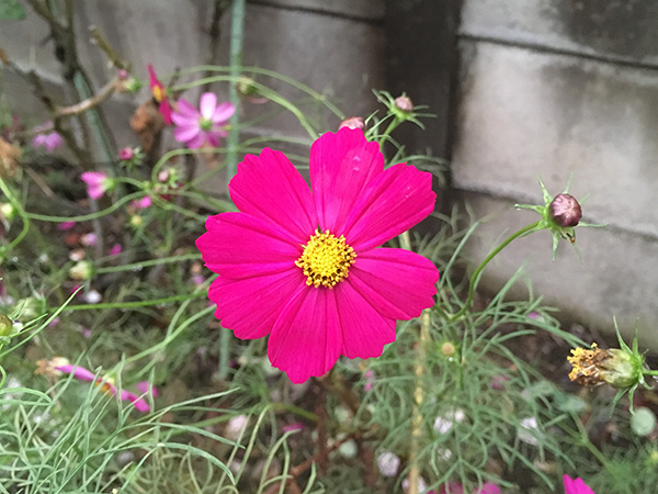 flower_8795a.jpg