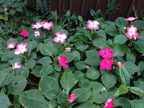 flower_9466.JPG