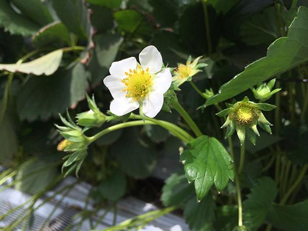 flower_9840a.jpg
