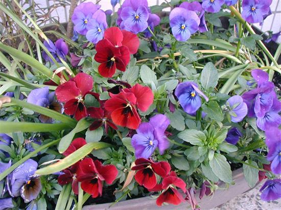 flower_P1010140c.jpg