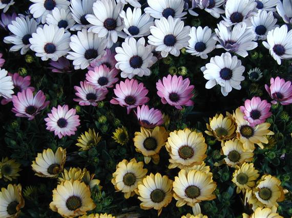 flower_P1010156.JPG