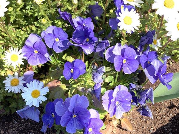 flowers_0359b.jpg