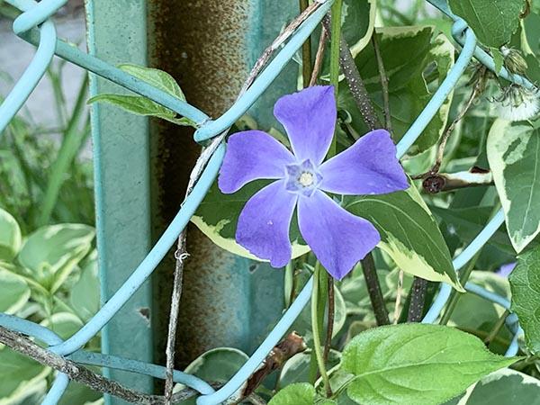 flowers_2149b.jpg