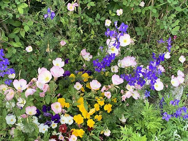flowers_2399a.jpg