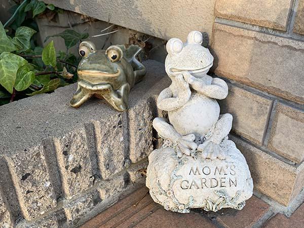 frog_6391a.jpg