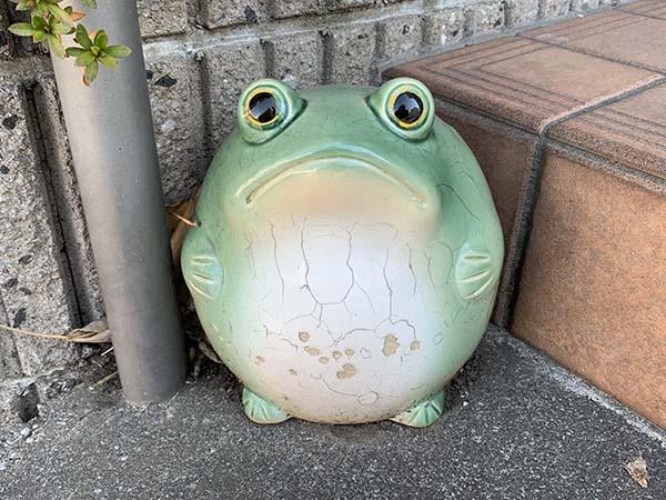 frog_6396a.jpg