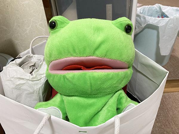 frog_7522a.jpg