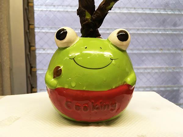 frog_8195a.jpg