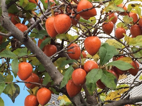 fruit_032a.jpg