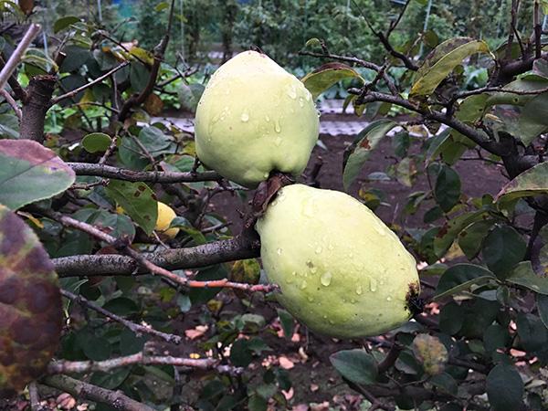 fruit_8773b.jpg