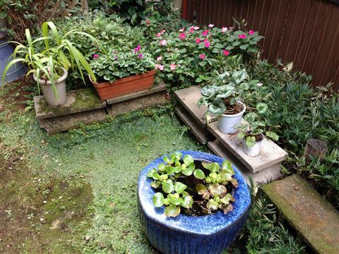 garden_9467.JPG