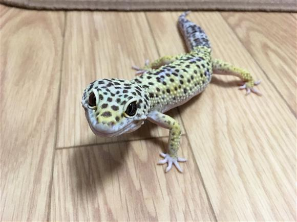 hyoumon_2648b.jpg