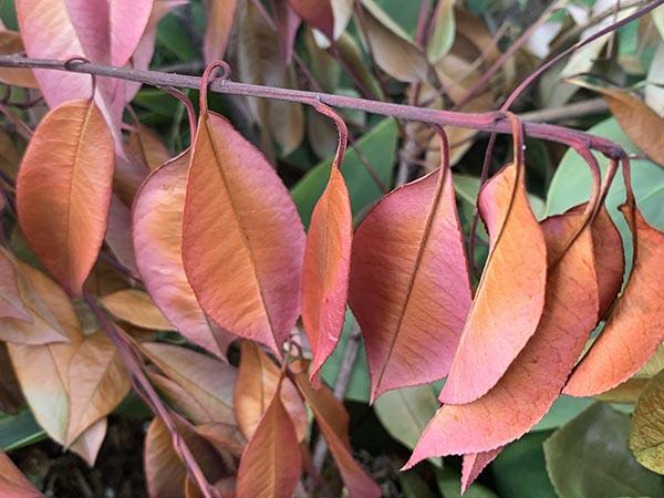 leaf_2316a.jpg