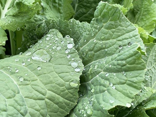 leaf_8691a.jpg