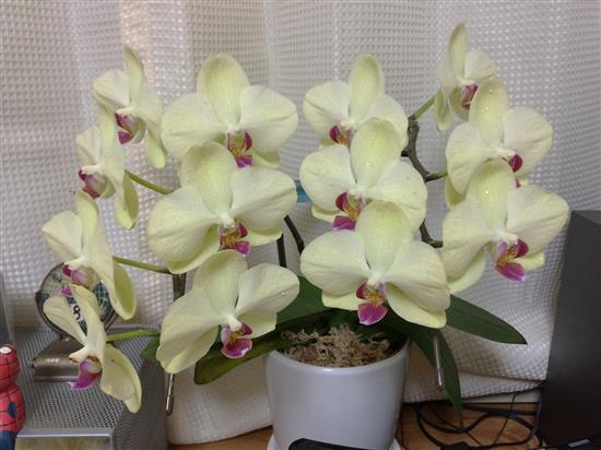 orchid_056a.jpg