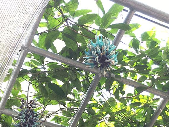 plant_0129b.jpg