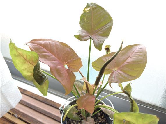 plant_083a.jpg