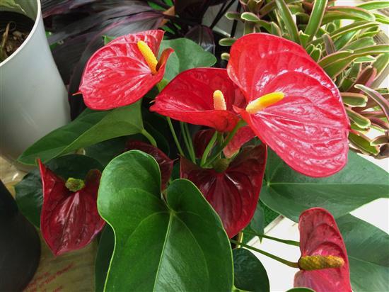 plant_125a.jpg