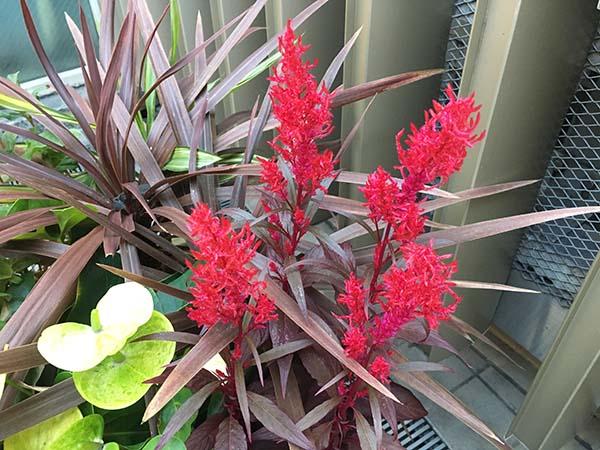 plant_1286a.jpg