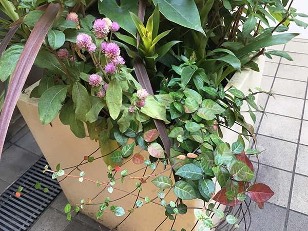 plant_1298a.jpg