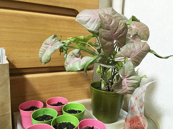 plant_7364b.jpg