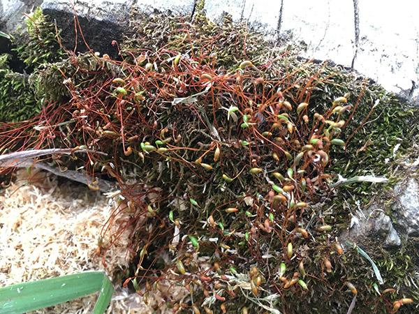 plant_7703b.jpg