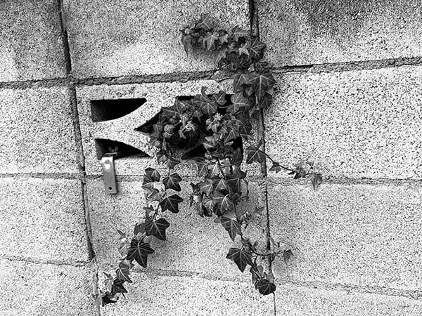 plant_E1778a.jpg