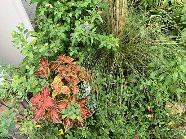 plants_0207a.jpg
