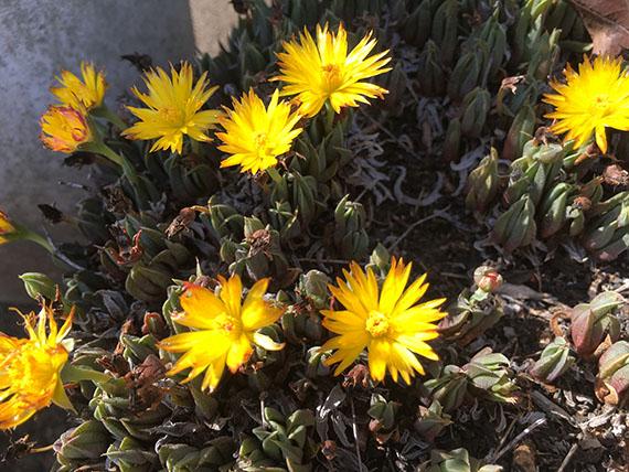 plants_1157b.jpg