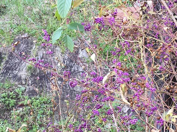 plants_4116a.jpg
