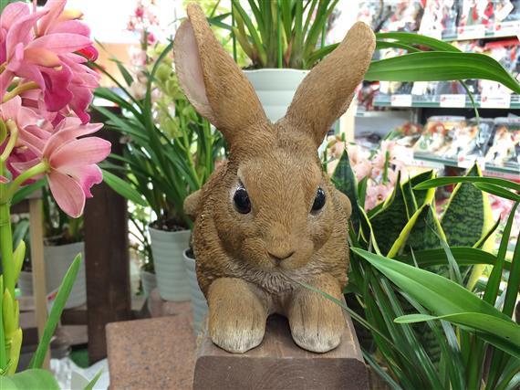 rabbit_128a.jpg