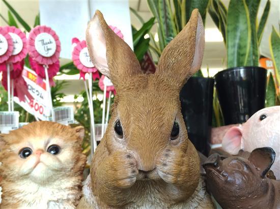 rabbit_134a.jpg