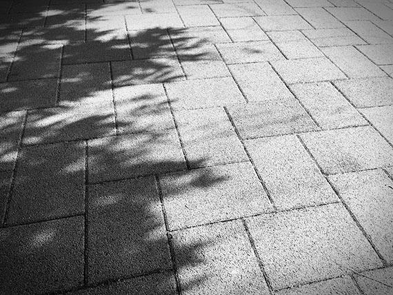 shadow_0768b.jpg