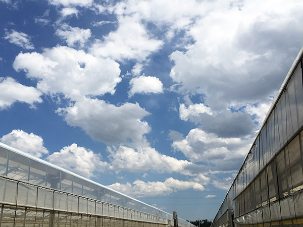 sky_9930a.jpg