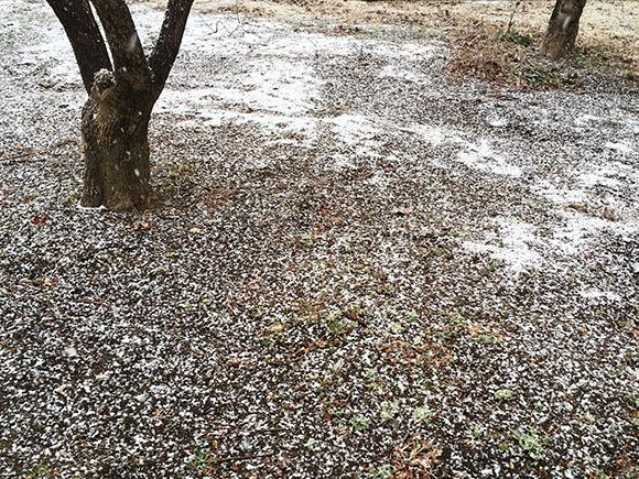 snow2018_3413b.jpg