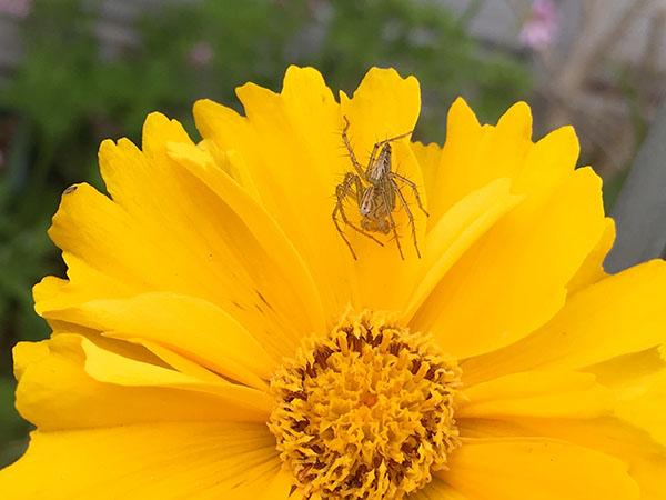 spider_0753a.jpg