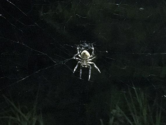 spider_4469c.jpg