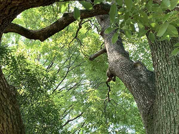 tree_0300a.jpg