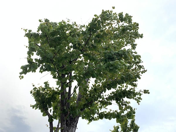 tree_1399b.jpg