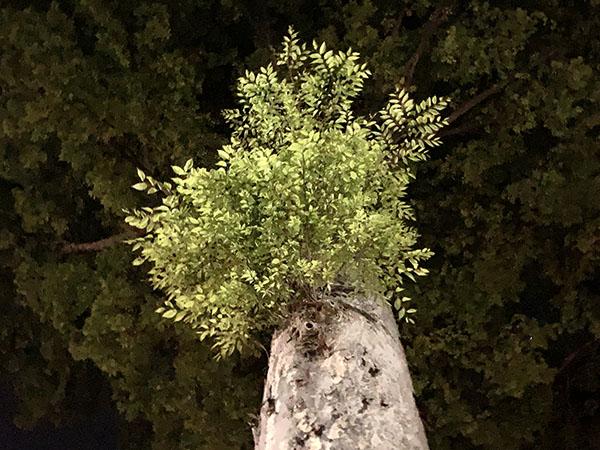 tree_1892a.jpg